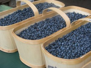 Bushels-of-Blueberries